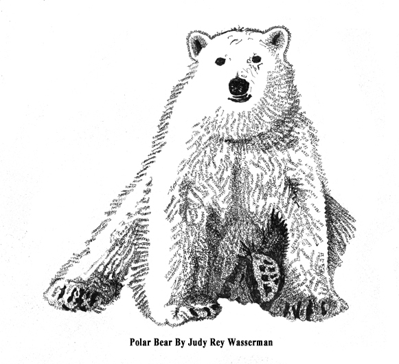 polar bear by Judy Rey Wasserman